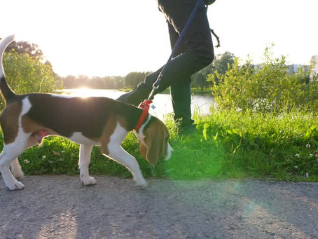 Father's Day Walk-A-Thon: Wags and Walks Across Canada!