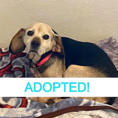 Frieda (Adopted!)