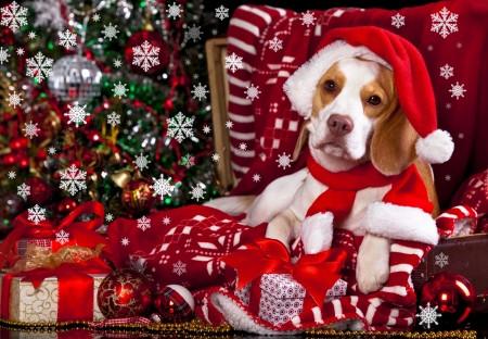 Christmas Wishlist: Beagle Edition