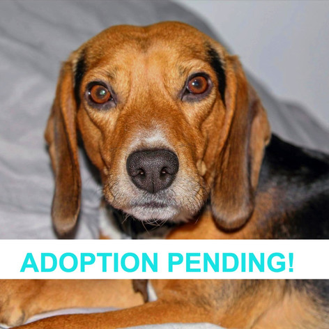 Harley (Adoption Pending!)