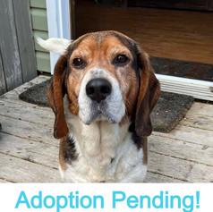 Sparky (Adoption Pending!)