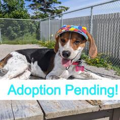Audrey (Adoption Pending!)