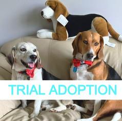 Stanley & Timmy (Trial Adoption!)