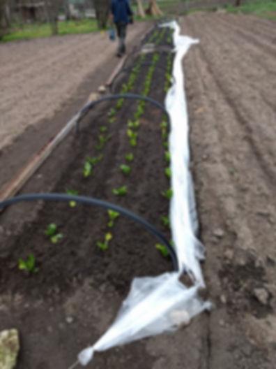 potager en agriculture raisonnée