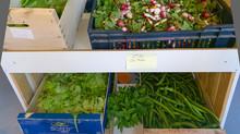 La saison des légumes redémarre !!