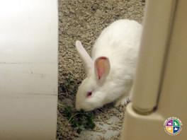 research-rabbit-eating-parsley-800x600.j