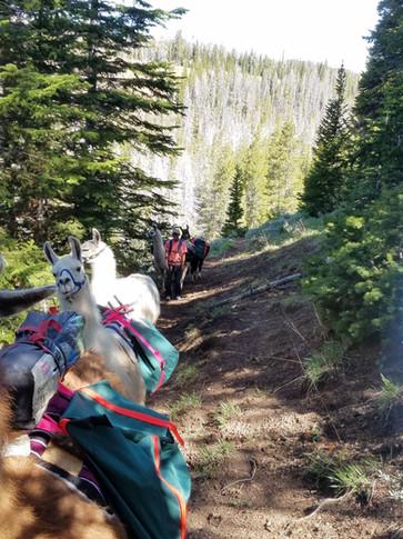 Spring bear hunt packing females