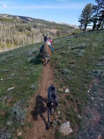Degan tied to Tina because he kept chasing elk.