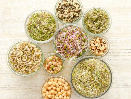 Les graines germées : un superaliment