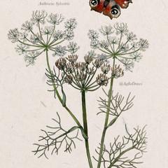 botanische prent