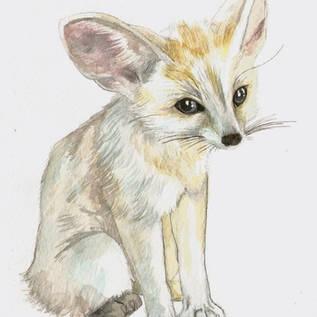 vennec fox
