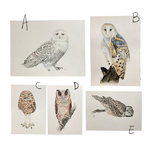 original owl paintings