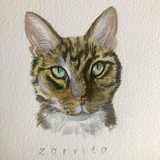 Zorrito