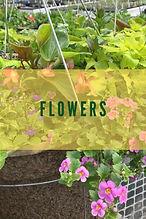 Vegetabletype_covers.jpg