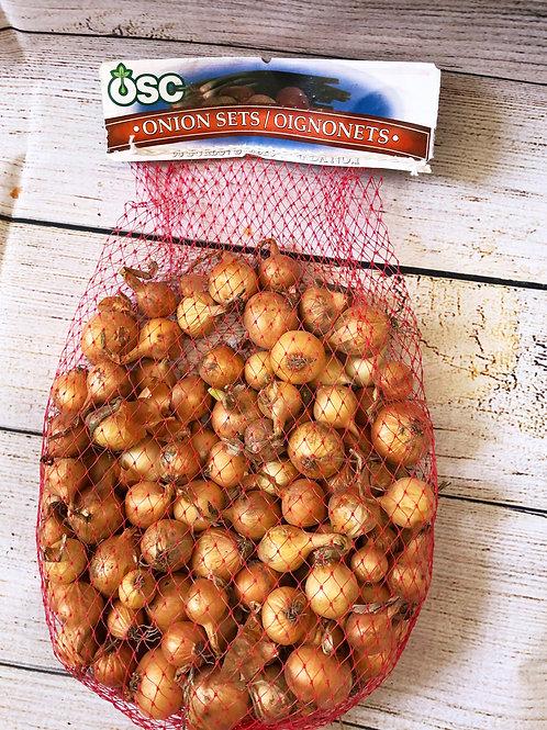 Dutch Onion Sets