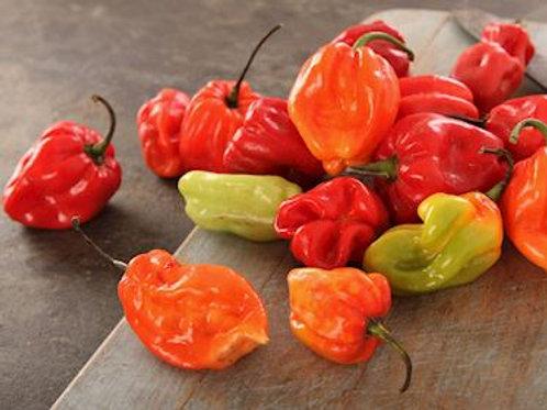 Caribbean Red Hot Pepper