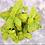 Thumbnail: Genovese Basil Seeds