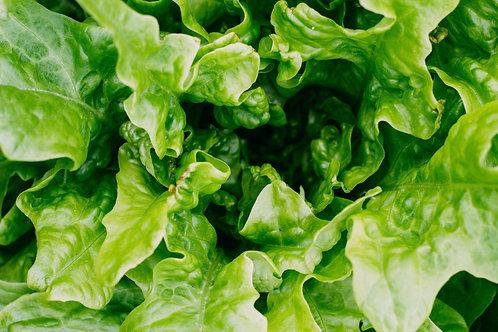 Little Gem Mini Lettuce