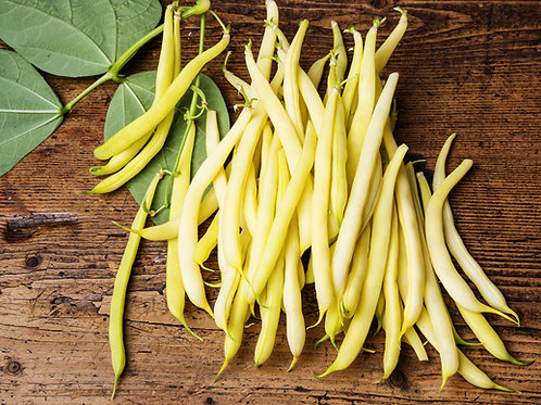 Golden Wax Bush Bean