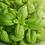 Thumbnail: Sweet Basil Seeds