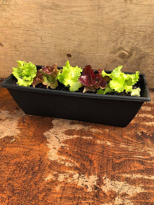 Lettuce Planters