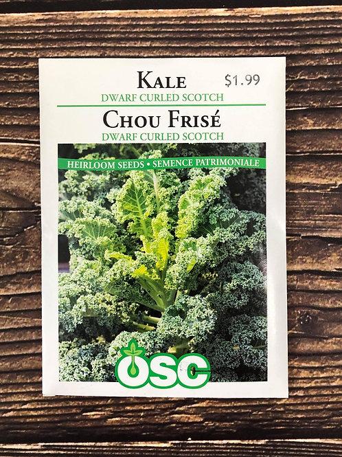 Kale Dwarf Curled Scotch