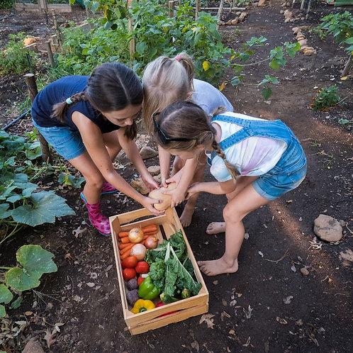 Kids Planter Bed