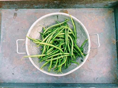 Blue Lake Pole Bean Organic