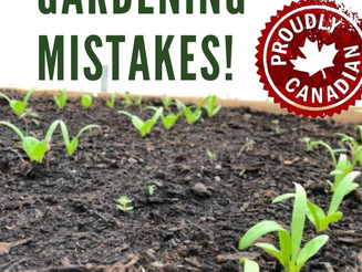 3 Common Canadian Gardening Mistakes