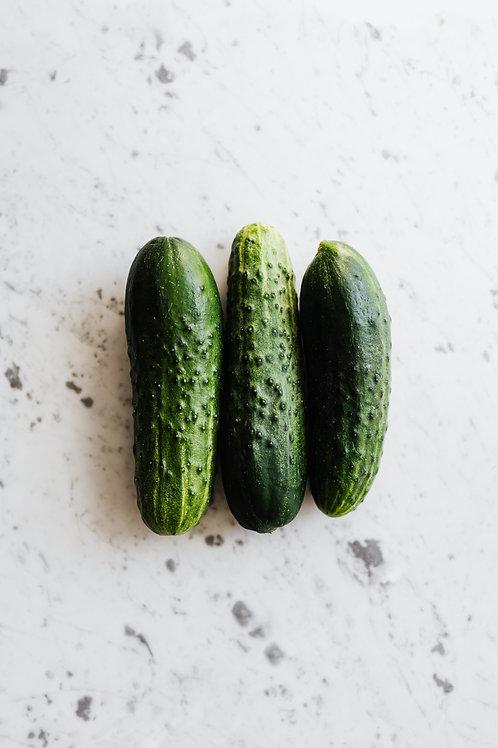 Patio Snacker Hybrid Cucumber
