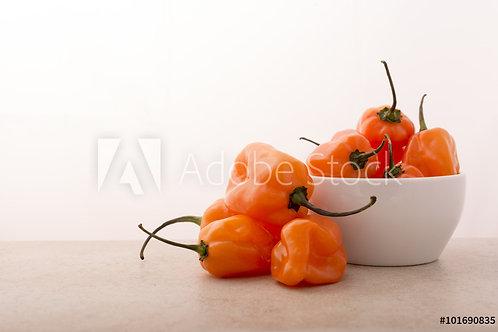 Habanero Orange Pepper