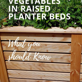 Why you should start your garden in a raised planter bed!