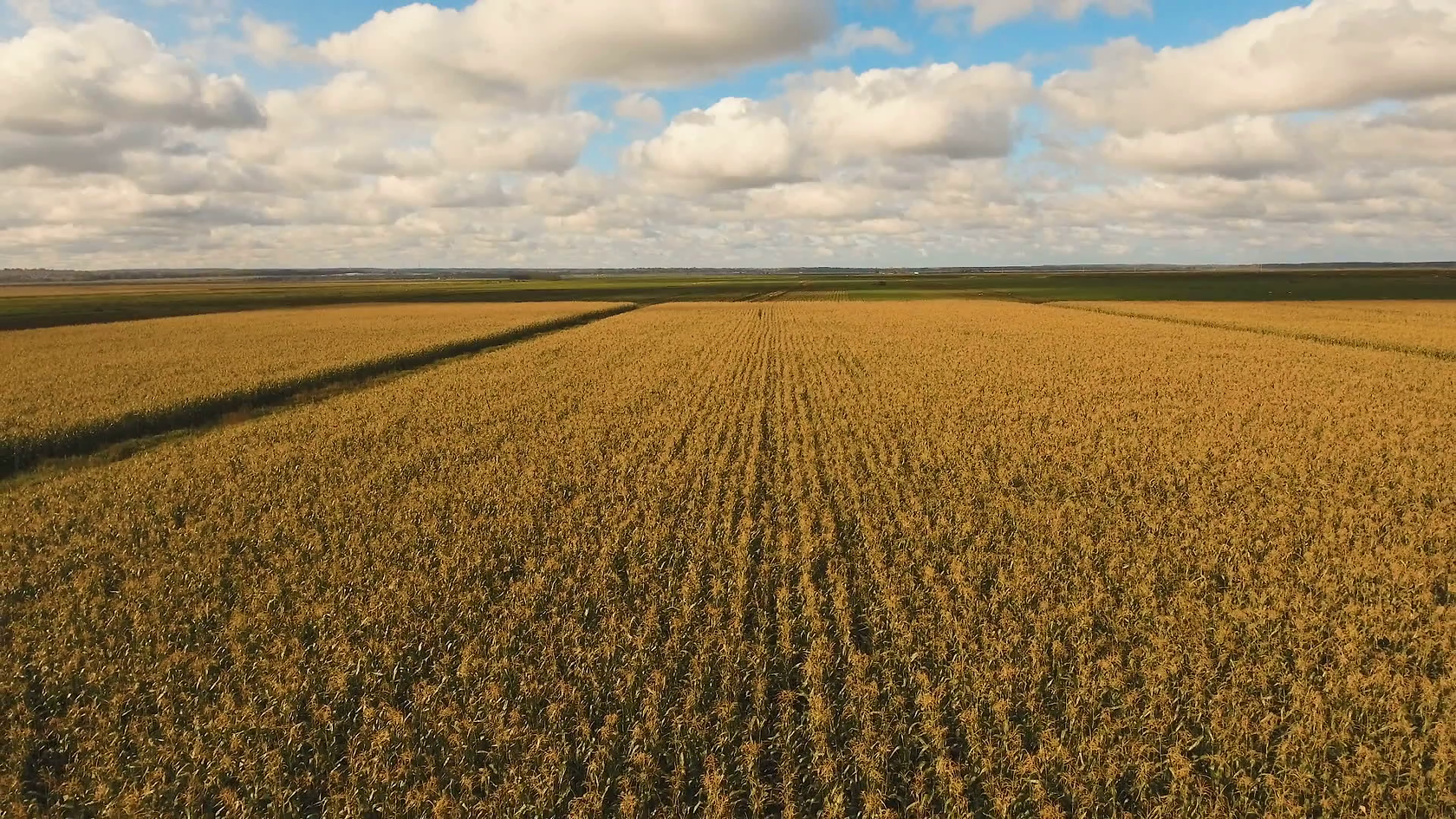 aerial-view-of-a-farm-field-with-rows-of