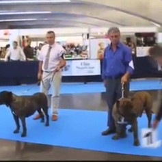 Spanish Champion Sando Can winning in Spain                           Sire to Int. Ch. Bravo Kennel's Fuega