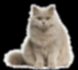 Cute-Cat-Transparent-Image.png