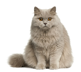 Cute-Cat-Transparent-Image.png