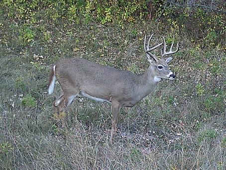 Deer Hunter's Checklist