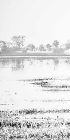 RiverDelta1 - 55 x 110.jpg