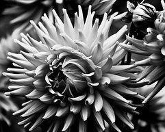 Flor3 60 x 48.jpg