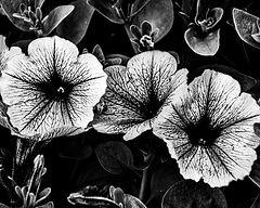 Flor2 - 60 x 48.jpg
