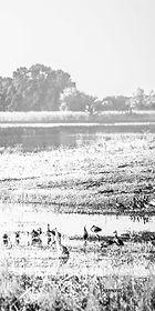 RiverDelta3 - 55 x 110.jpg