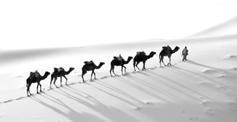 Camel Backlight