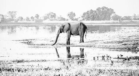 Elefante MSM1 copy.jpg