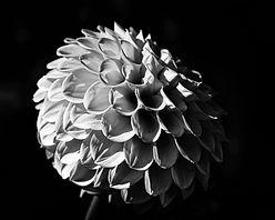Flor1 - 60 x 48.jpg