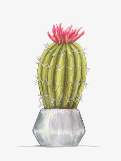 Kelly Senter -  Title: Cacti tall