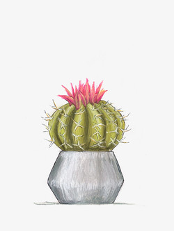 Kelly Senter  Title: Cacti tall