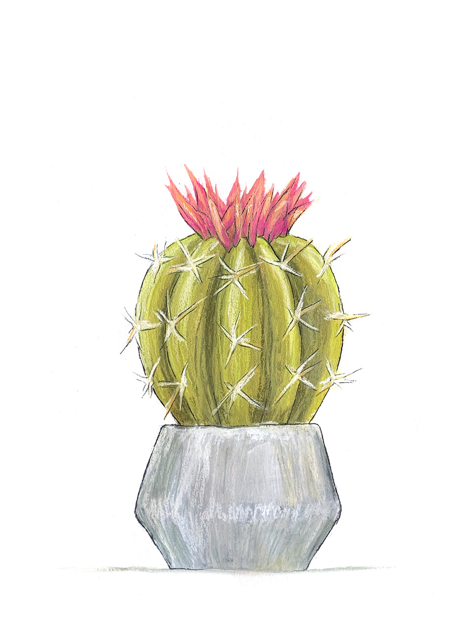 Cacti-2