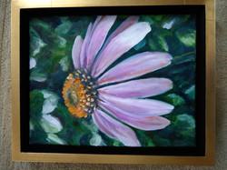 Jennifer Zygmunt - Title: Echinacea