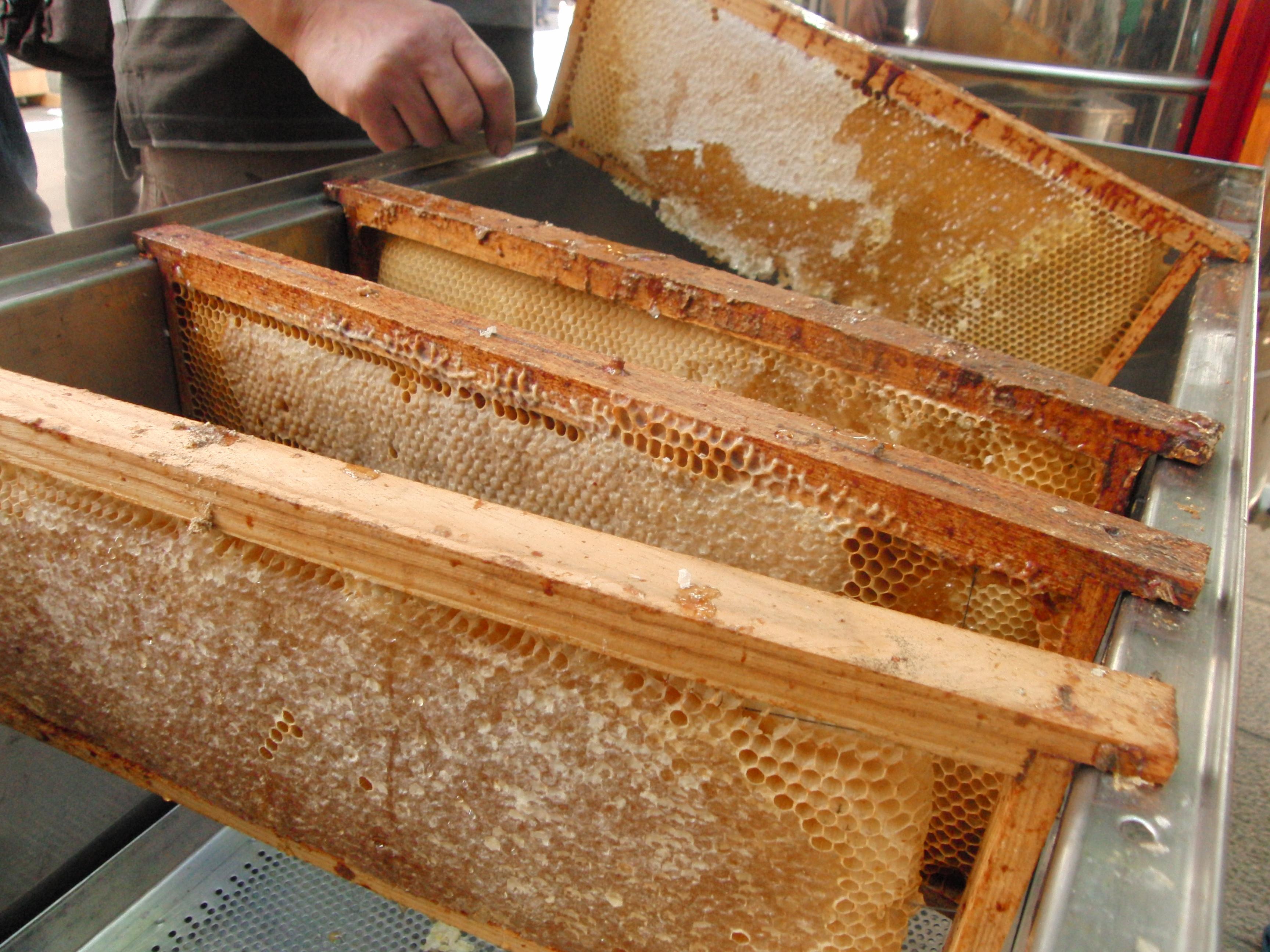 Experiència apiturística
