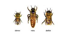 Coses d'abelles